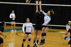 uog women's volleyball will compete in holiday classic